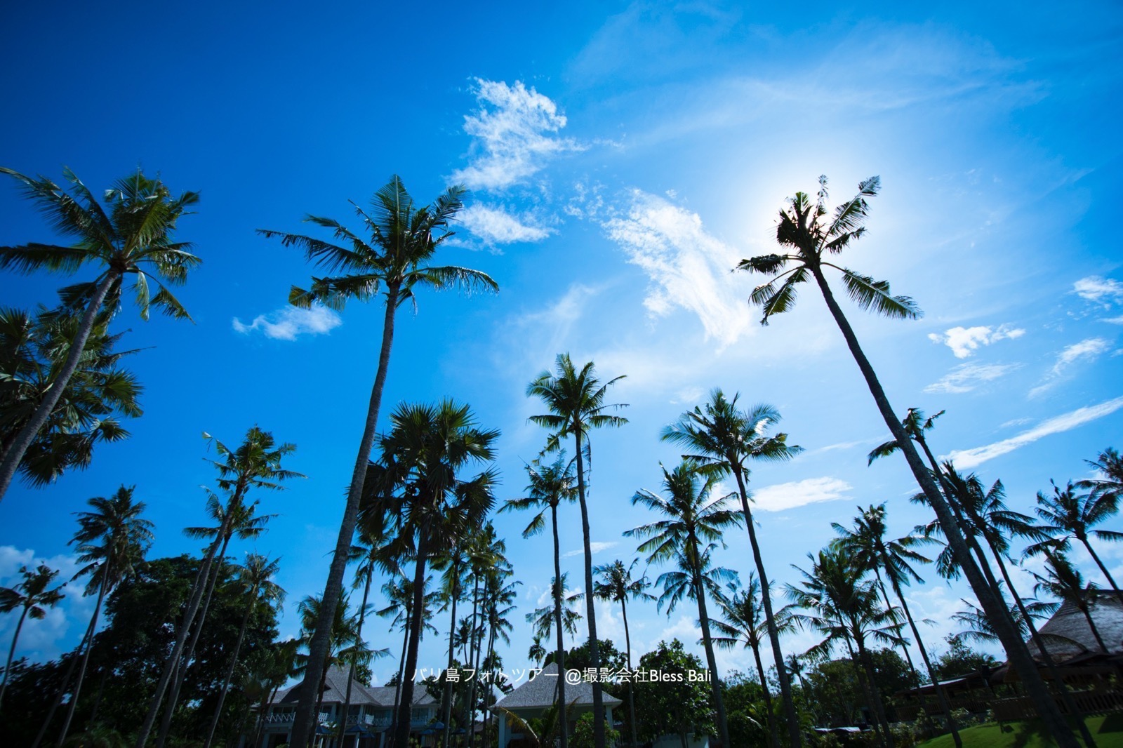 バリ島のヤシの木